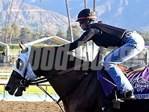 Black Seventeen preps for the Breeders' Cup.