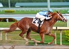 2012 Risen Star Winner El Padrino Retired