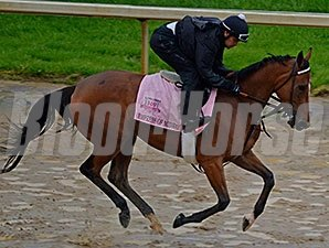 Empress of Midway jogs on a sloppy tarck for the Kentucky Oaks.