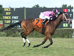 Silver Medallion Grabs Gold in Tropical Turf