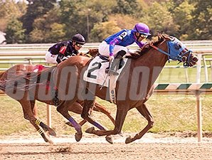 Standup Comic wins a Claiming Race at Laurel Park on September 17, 2014.