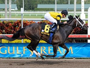 Justwhistledixie Seeks Grade I Win in Acorn