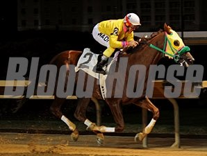 Rapid Redux wins on October 14 at Charles Town, to make the streak 18.