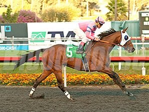 Broken Sword wins the 2013 Bayakoa.