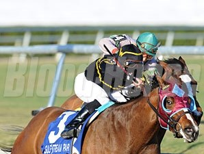 Final Mesa wins the 2011 Old Hat Stakes.