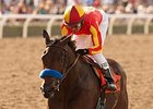 Executiveprivilege to Run in Starlet Dec. 8