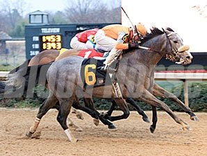 Win Willy wins the 2011 Fifth Season Stakes.