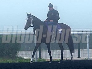 Elleval (IRE) preps for the Godolphin Mile at Meydan 3/6/2014.