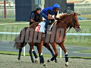 Crowded House Dubai World Cup Week 2010.