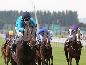 Brown Panther wins the Irish St. Leger Stakes.