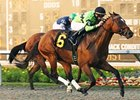 Stakes Winner Country Day Retired