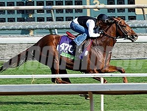 Tom's Tribute works for the Breeders' Cup Oct. 26, 2014.