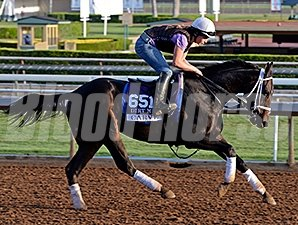 Carve preps for the 2014 Breeders' Cup.