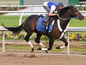 Pyro Early Favorite in Louisiana Derby