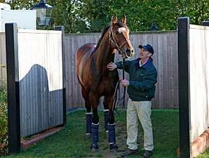 Frankel Returns to Birthplace