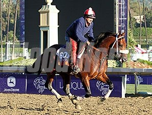 Chips All In gallops at Santa Anita in preparation for the 2013 Breeders' Cup.