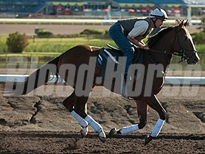 Ami's Holiday - Woodbine, July 5, 2014.