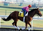 Dubai World Cup: Dale Romans - Little Mike