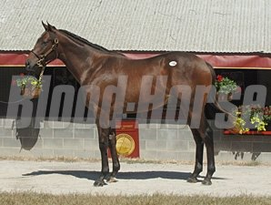 Castaway as a yearling.
