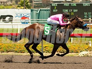 Scherer Magic wins the 2012 Hollywood Juvenile Championship.