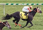 Ben's Cat Maryland's 2012 Horse of the Year