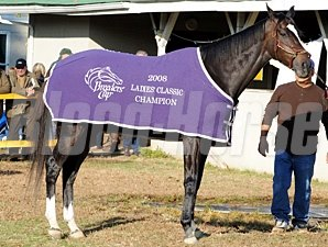 Zenyatta posing for her fans next to her barn sporting her 2008 Ladies Classic blanket.