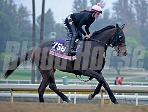 Ria Antonia - Breeders' Cup 2013, October 25, 2013.