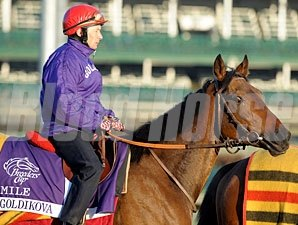 Goldikova at Churchill Downs, November 1, 2011.