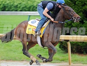 Brilliant Speed works towards the Kentucky Derby. 5/2/2011