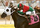 GI Winner Ultimate Eagle Retired to Stud