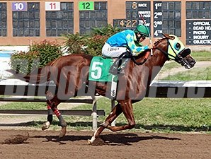 Alsono wins the 2014 Duke City Sprint Stakes.