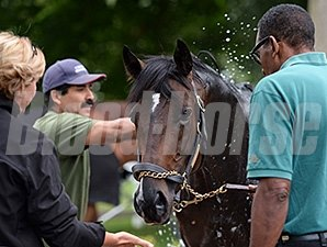 Mr Speark at Saratoga August 17, 2014.