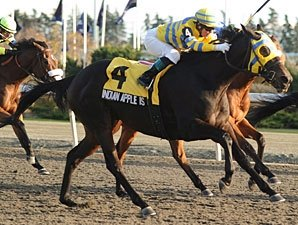 Canadian Champion Indian Apple Is Retired