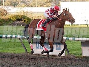 Commander wins the 2013 BC Premier's Handicap.