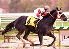 Ben's Cat Hopes to Rebound in Parx Dash