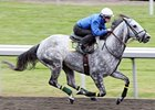 Augustin Stable Champions Work at Keeneland