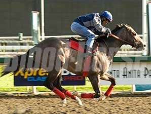 The Pamplemousse breezes at Santa Anita March 25, 2009