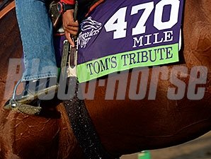 Tom's Tribute - Breeders' Cup 2014