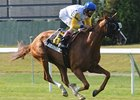 Lady Shakespeare Writes Perfect NY Finish