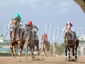 Mordi's Miracle wins the 2013 Millions Classic Preview Stakes.