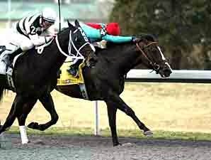 Turfway Expects Large Field for Vinery Spiral