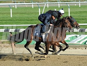 Last Gunfighter and Easter Gift work at Belmont Park on October 26, 2013.
