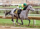 Disposablepleasure's Race Career in Jeopardy