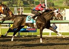 Cal Champion Bold Chieftain Retired