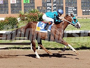 Roll Out the Band wins the 2014 Albuquerque Journal Stakes.
