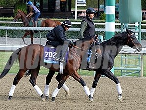 Rum Point at Santa Anita for the Breeders' Cup.