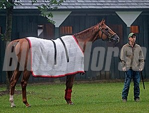 Wise Dan after his Saratoga work August 24, 2014.