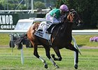 Riposte Primed For Big Effort in Orchid