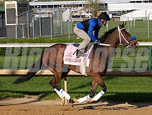 She's a Tiger - Churchill Downs, April 23, 2014.