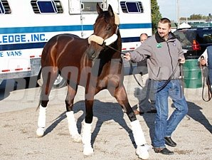 Uncle Mo arrives at Churchill Downs for the Breeders' Cup 10/24/2011.